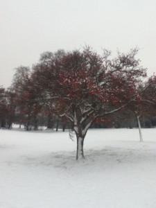 Snow&Berry