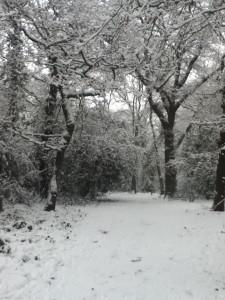 Snow&Path